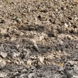 Fragment of field with plowed soil — Stock Photo #7680872