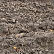 Fragment of field with plowed soil — Stock Photo #7681056