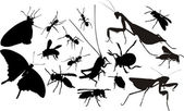 Insects silhouettes — Stock Vector