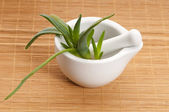 Aloe vera - herbal medicine — Photo