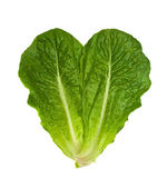 Two Leaves Of Salad — Stock Photo