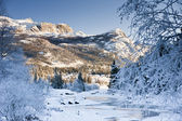 Magic Winter — Stock Photo