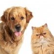 Dog and ginger cat on white background — Stock Photo #6782538