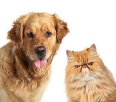 Dog and ginger cat on white background — Stock Photo