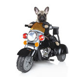 Dog riding on a motorcycle — Stock Photo