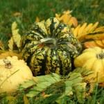 Gourds — Stock Photo #7113962