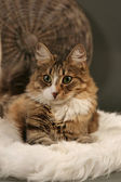 Lindo gato — Foto de Stock
