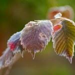 congelate le foglie d'autunno — Foto Stock