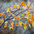 Frozen autumn leaves — Stock Photo #7460117