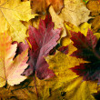 Autumn leaves background — Stock Photo #7460581