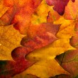 Autumn leaves background — Stock Photo #7460589