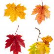 Autumn leaves isolated on white background — ストック写真