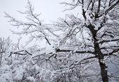 Vinter träd — Stockfoto