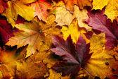 Herfstbladeren achtergrond — Stockfoto