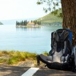 Traveling together. Two backpacks over the tree - Stockfoto