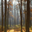Autumn forest — Stock Photo #7825179
