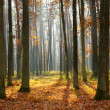Autumn forest — Stock Photo #7825235