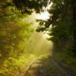 Beautiful morning in the forest — Stock Photo #7825252