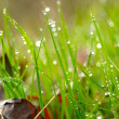 Green grass with waterdrops. Shallow DOF - Stock Photo