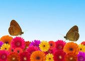Fondo flor margarita — Foto de Stock