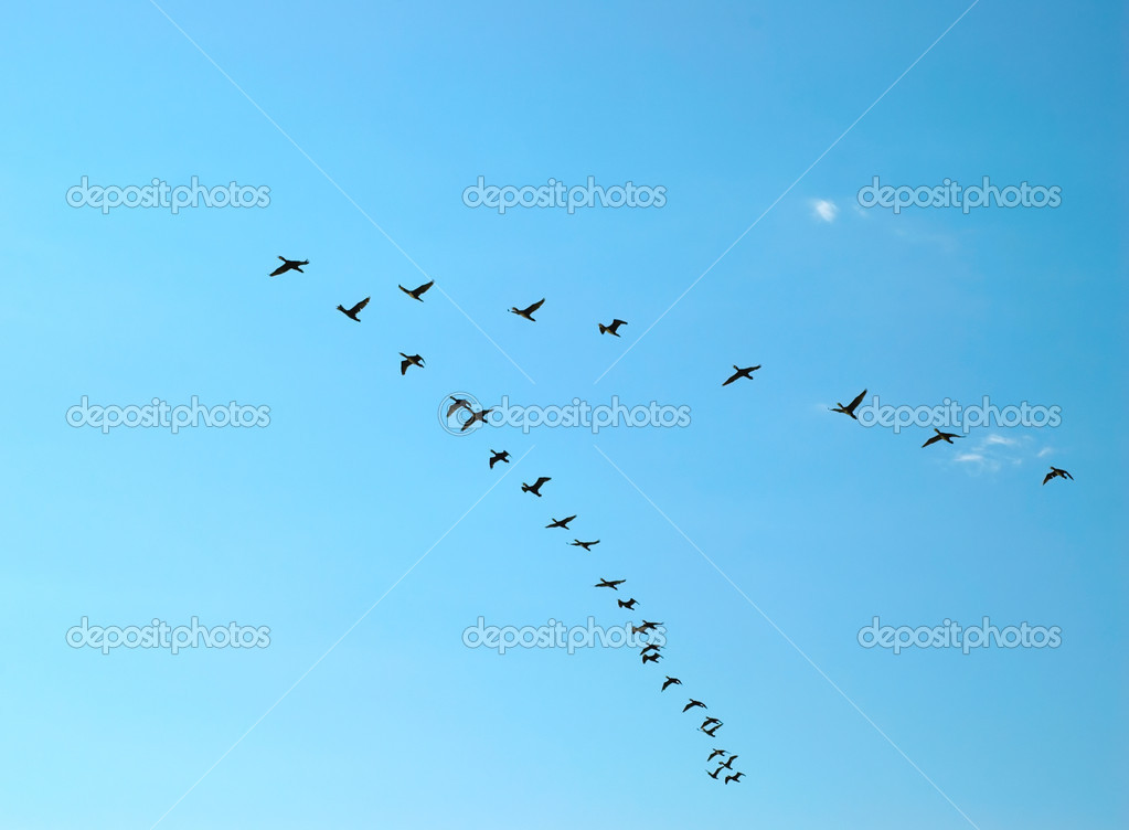 Silhouette of flying birds — Stock Photo #7825371