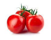Tomatoes isolated on white — Foto Stock
