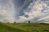 Зеленые поля под голубым небом — Stock Photo