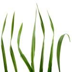 Постер, плакат: Blades of grass