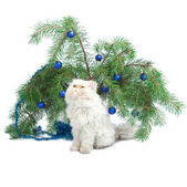 A branch with New Year's balls and white cat — Stock Photo