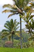 тропический пейзаж. индонезия. бали — Стоковое фото