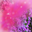 Flowers on abstract background — Stock Photo