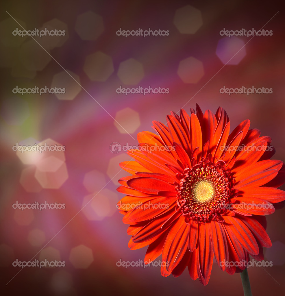 Flowers on  abstract background — Stock Photo #7901083