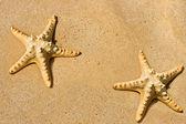 Star fish on the beach — Stock Photo