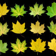 Autumn leaves — Stock Photo #7426685
