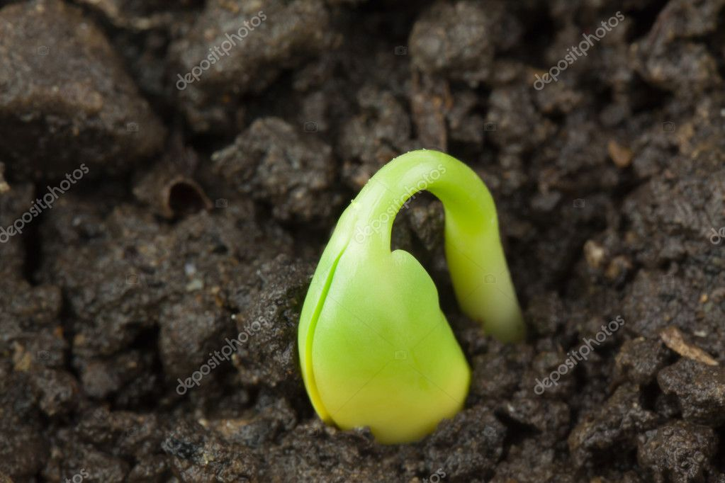 Small plant of soy — Stock Photo #7766453