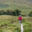Male trekker walks along a mountain path in Snowdonia - Stock Photo