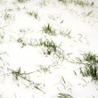 Grass in snow — Stock Photo