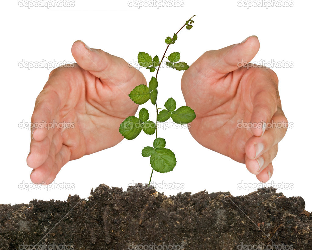 Sprout protected by hands — Stock Photo #6826159