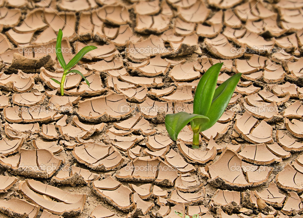 Planst growing from barren land  — Stock Photo #6826298