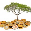 Tree growing from pile of coins — Stock Photo