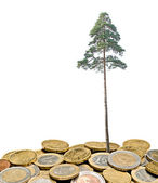 Pine tree growing from pile of coins — Stock Photo