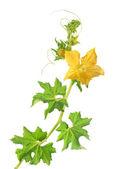 Videira e flor — Fotografia Stock