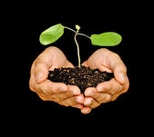 Hands with sapling — Stock Photo