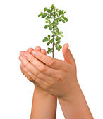 Sprout in palms as a symbol of nature protection — Stock Photo