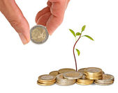 Avocado sapling growing from coins — Stock Photo