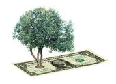 Olive tree on banknote — Stock Photo
