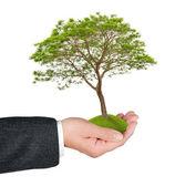 手の木します。 — ストック写真