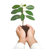 Sapling in hands — Stock Photo