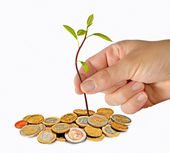 Planting avocado seedling to pile of coins — Stock Photo