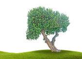 árvore no prado — Fotografia Stock
